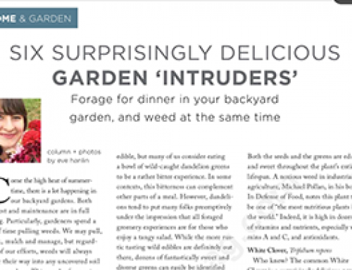 Six Surprisingly Delicious Garden Intruders… an article