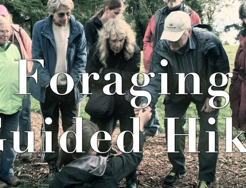 Foraging Guided Hike! August 2017