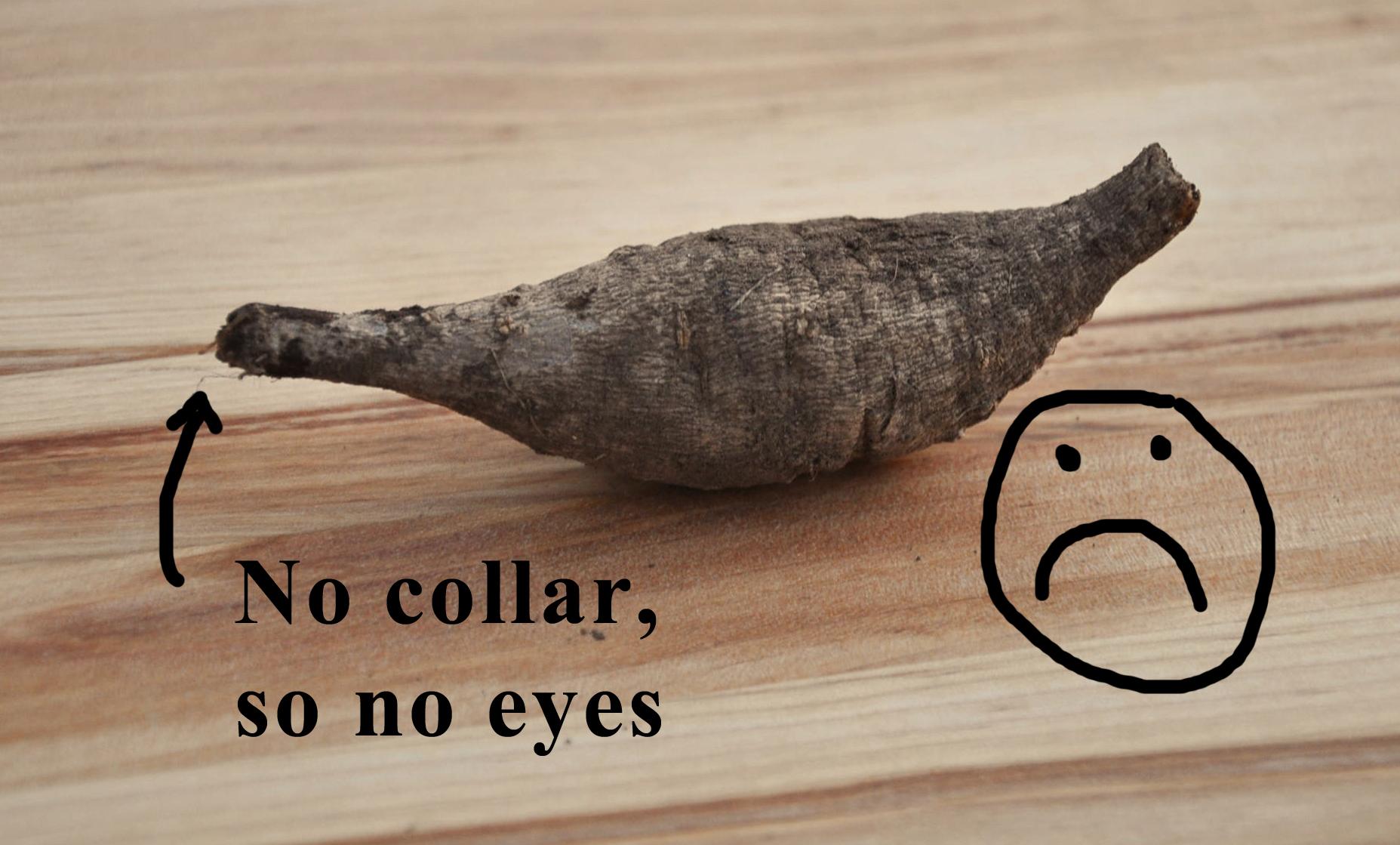 No collar, so no eyes